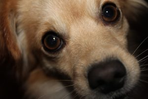dog-600752_640